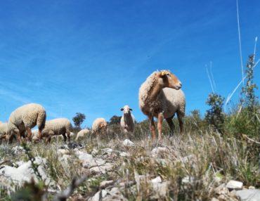 Débroussaillement Natura 2000. Photo : Thierry Alignan