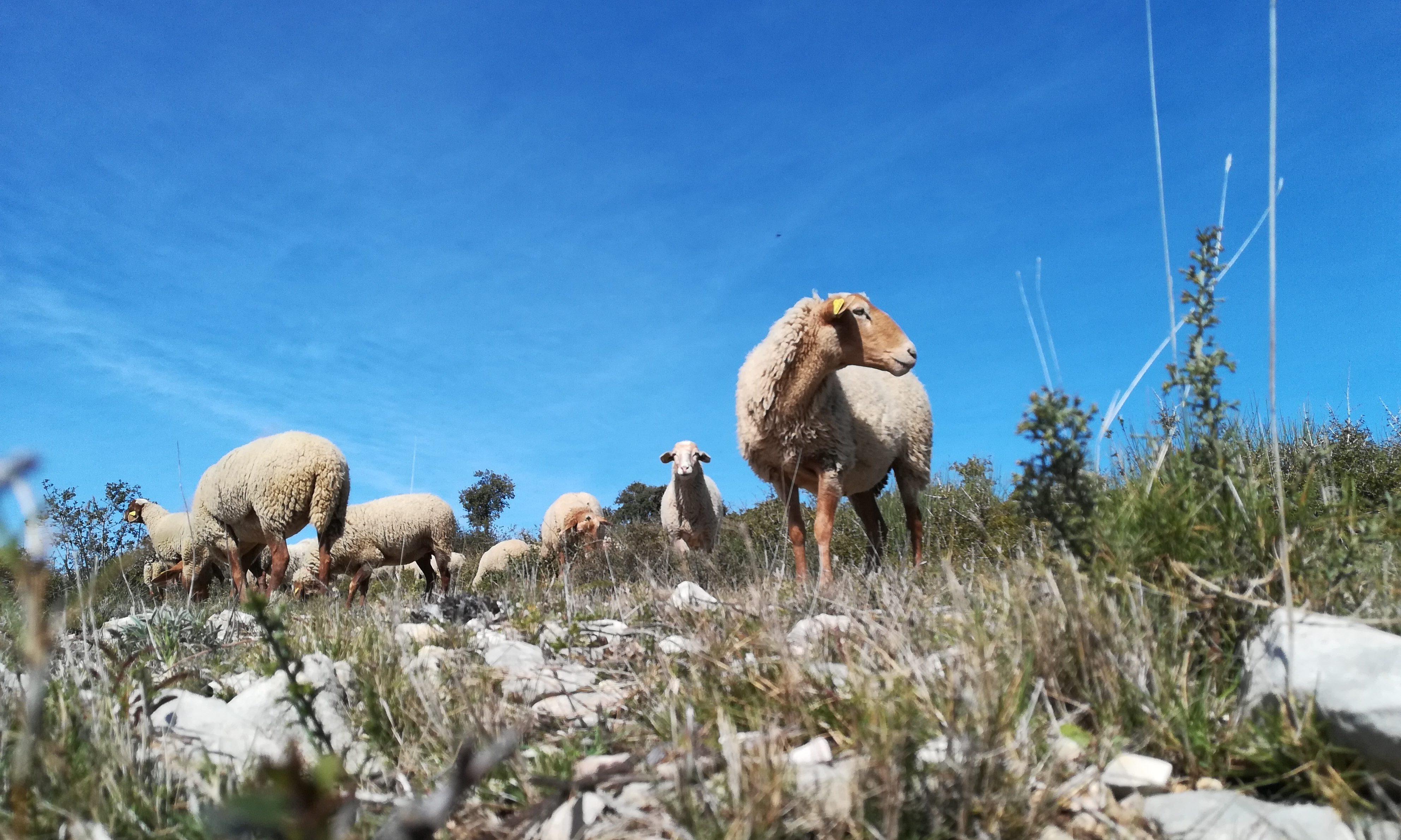 Le feu, pour soutenir (aussi) le pastoralisme. Photo : Thierry Alignan