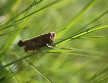 Inventaires naturalistes. Photo : Angélique Dieux