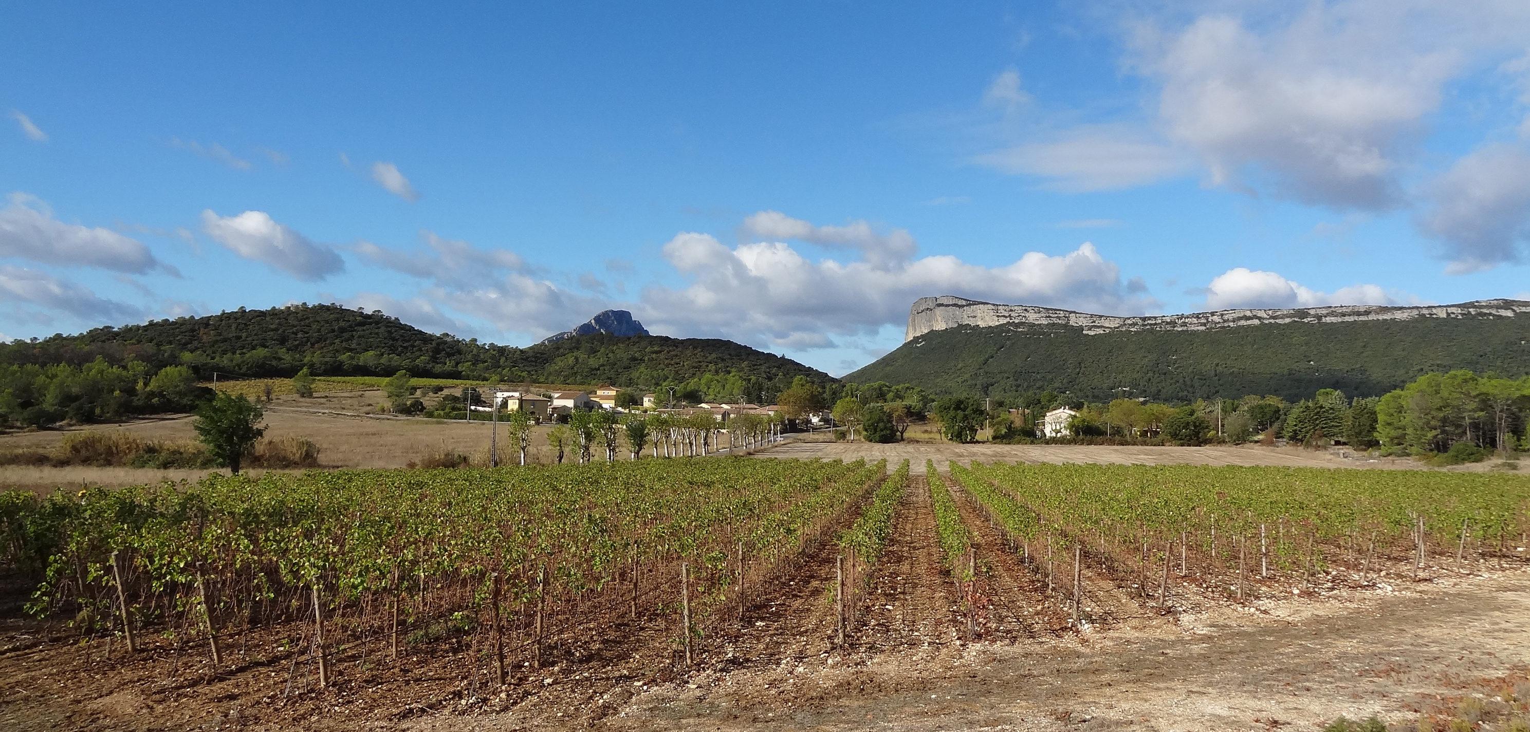 """Notre territoire labellisé """"Vignobles & Découvertes®. Photo : Christophe Colrat"""