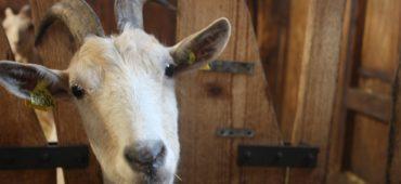 Journée adhérents bienvenue à la ferme. Photo : Angélique Dieux