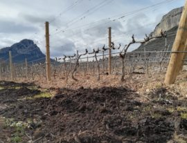 Utilisation du compost en viticulture. Photo : Thierry Alignan