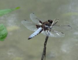 Expé naturaliste : libellules et papillons
