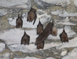 Expé naturaliste : chauves-souris