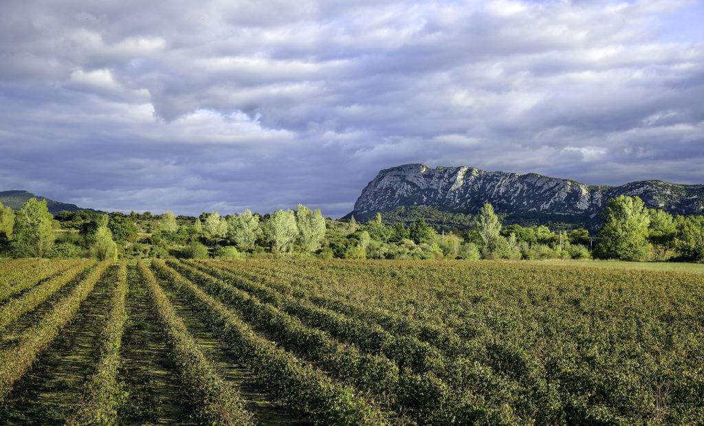 Destination : Terres de Garrigues et du Pic Saint-Loup. Photo : Emmanuel Perrin